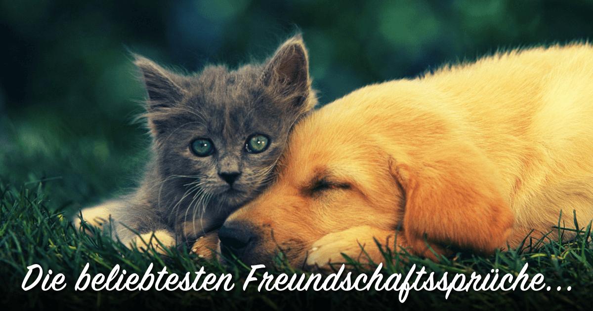 ᐅ Beliebte Freundschaftssprüche Sprüche Zum Thema Freundschaft