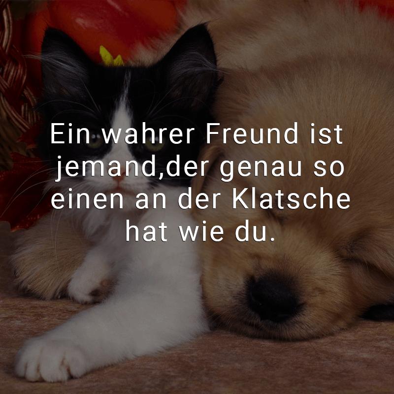 Ein wahrer Freund ist jemand, der genau so einen an der Klatsche hat wie du.